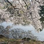 Vídeo Resumen Viaje a Japón 2009